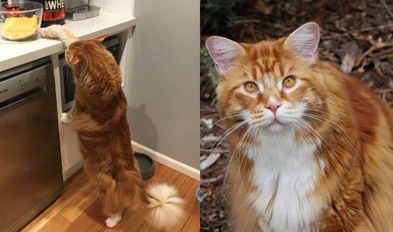 Топ 10 самые дорогие породы кошек в мире