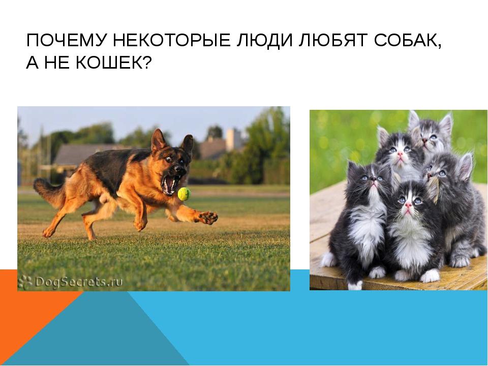 Почему собаки не любят кошек: основные причины