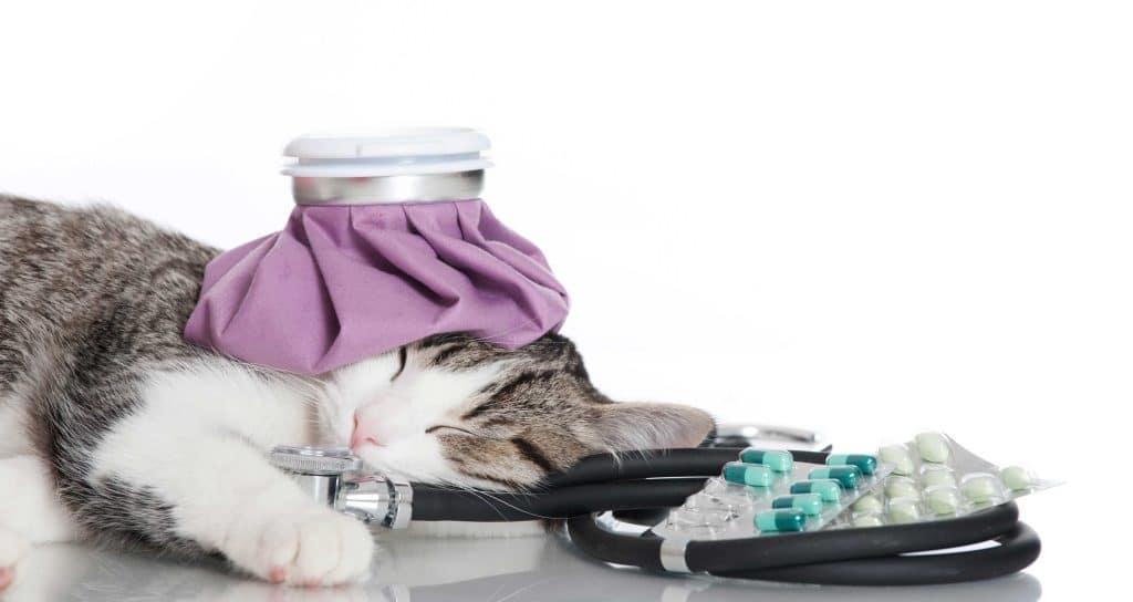 Как лечить кота от простуды в домашних условиях