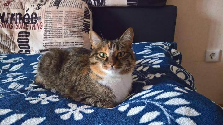 Приют или передержка для кошек. основные правила содержания