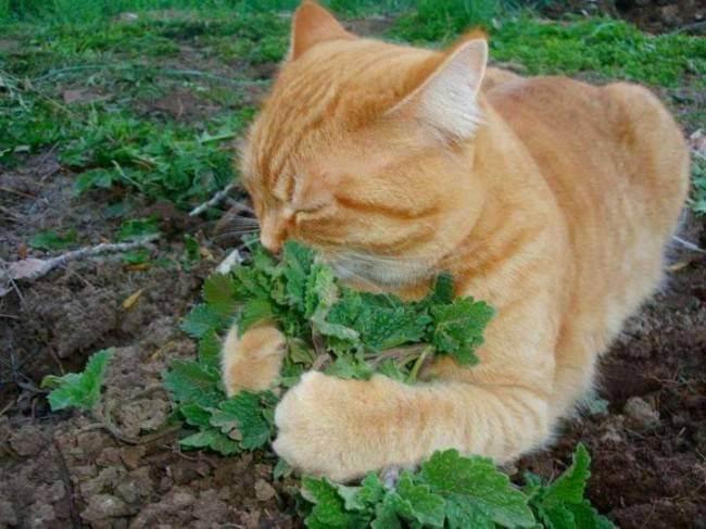 Что делать если кот перестал ходить в лоток: психологические и физические проблемы кошек