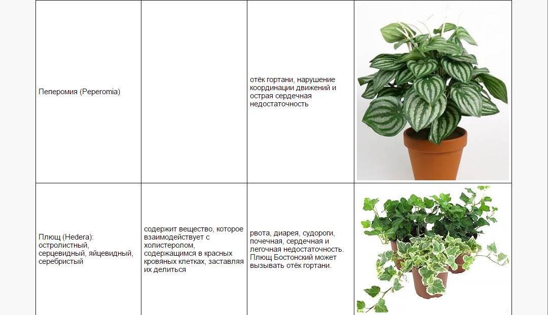 Растения для кошек, ядовитые, опасные, вредные, полезные комнатные растения | кошки - кто они?