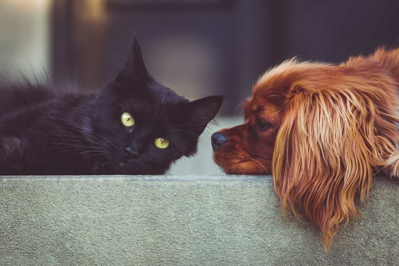 Кот и собака в одном доме: как подружить питомцев