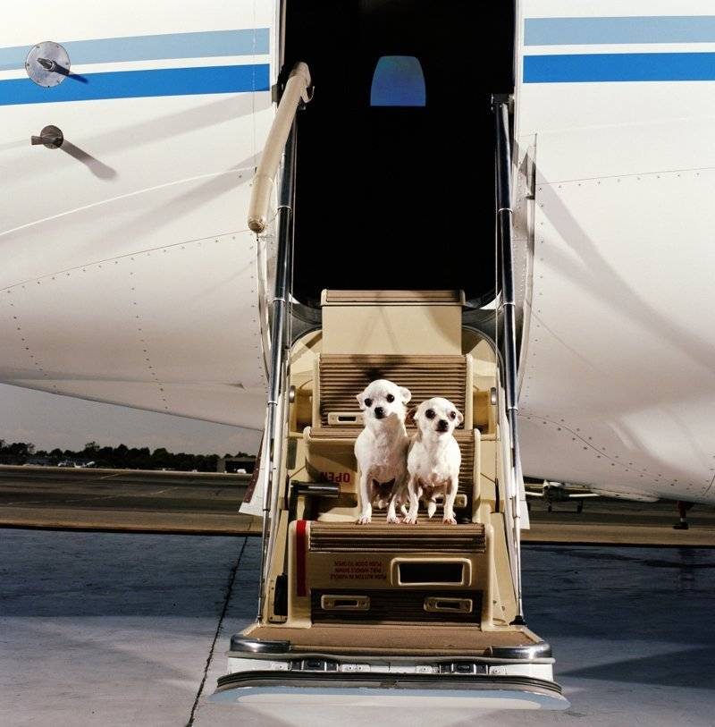 Перевозка кошки в самолете — основные правила