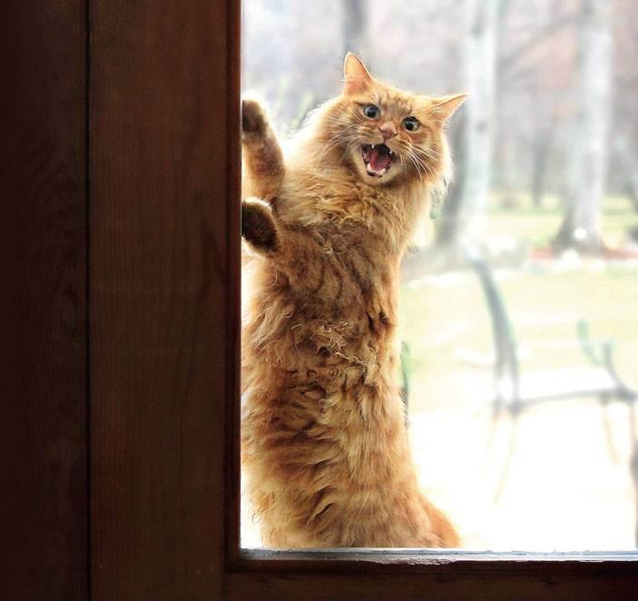 Как понять кошку: немного о кошачьем языке — статьи — rex24.ru: домашние животные, выбор, уход и воспитание, каталог компаний, эксперты.