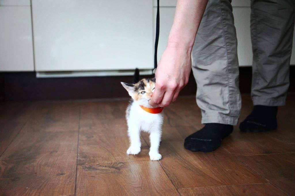 Как дрессировать кота в домашних условиях: уроки для начинающих