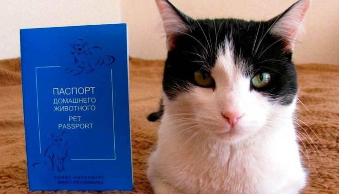 Договор купли-продажи котенка - бланк образец 2020