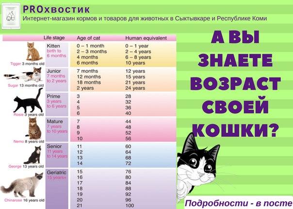 Возраст кошки по человеческим меркам: таблица, расчет  - mimer.ru