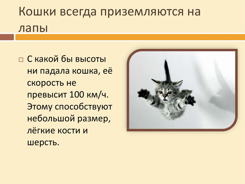 У кошки отнимаются лапы: симптомы и причины, первая помощь, 3 метода лечения