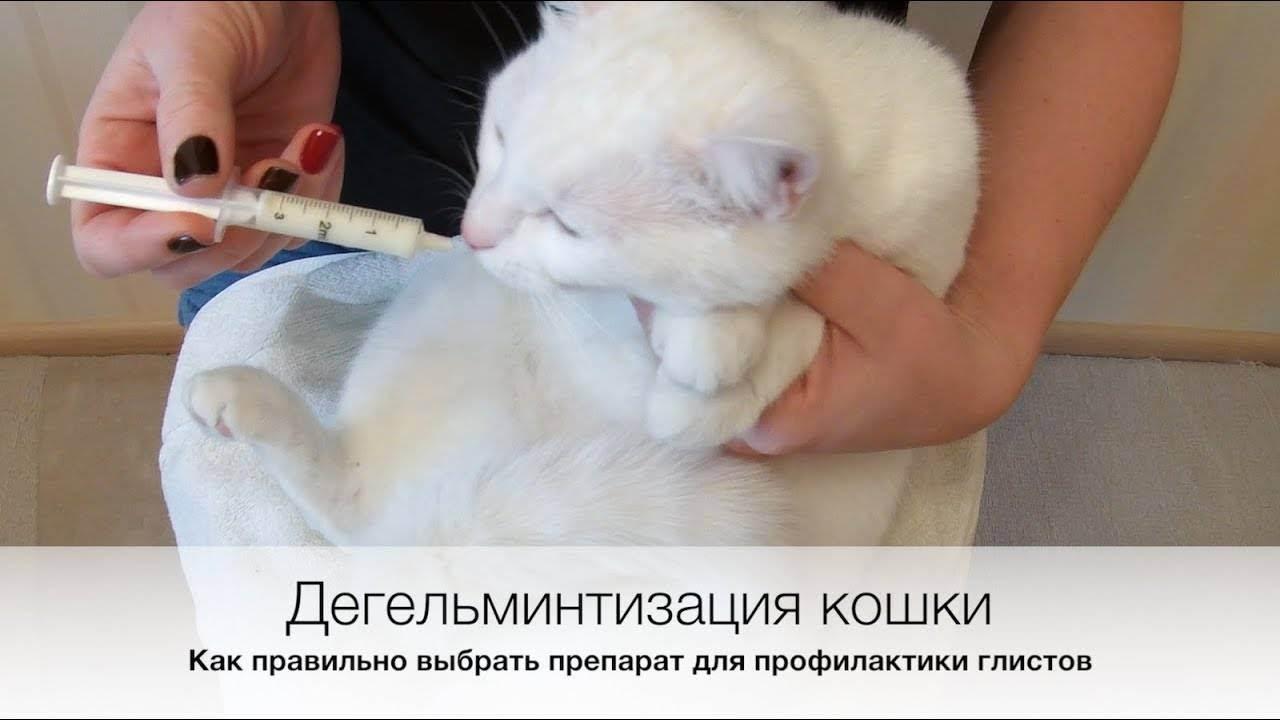 Глисты у кошек и котят – симптомы и способы лечения