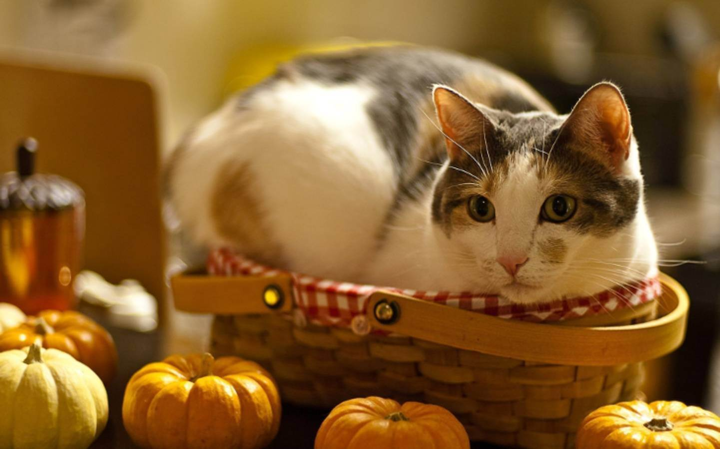 Почему кот любит оливки: возможные причины, можно ли давать, польза и вред для животного
