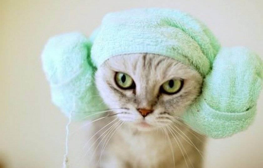 Правильные шаги, как помыть кота, если он боится или не желает принимать водные процедуры