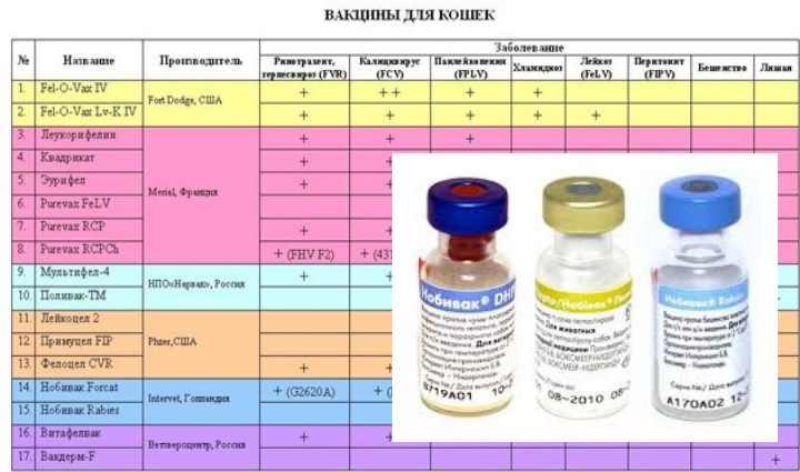 Линейка вакцин нобивак – надежная защита для вашей кошки