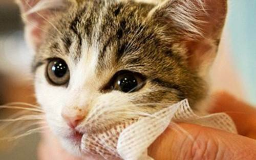 Как правильно почистить зубы кошке в домашних условиях