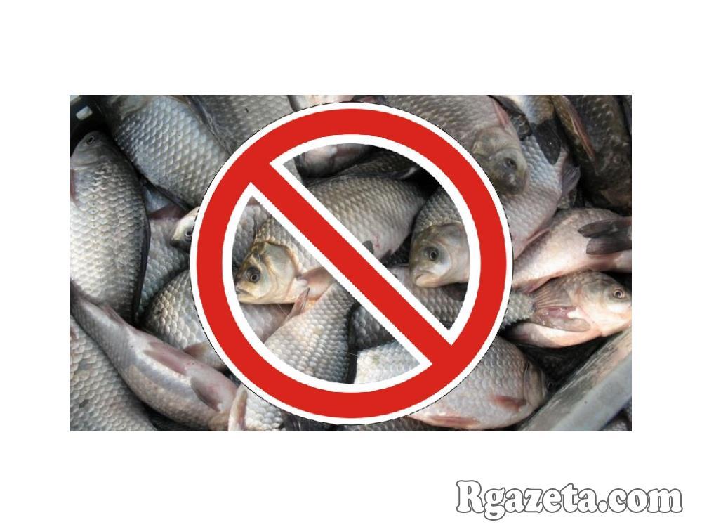 Почему кастрированным котам нельзя рыбу, что им можно есть