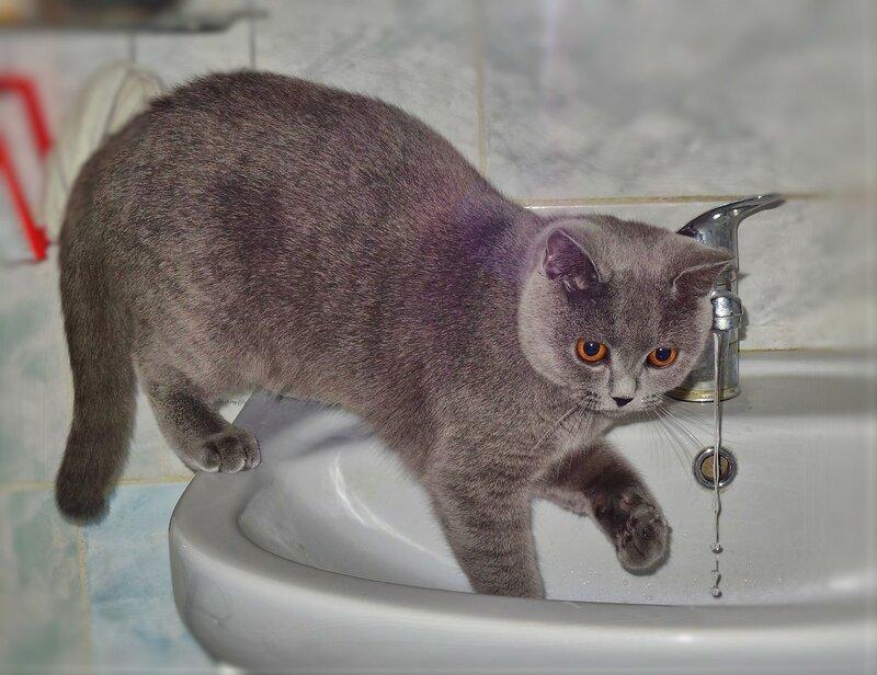 Почему кошки умываются, а собаки нет? причины, фото и видео