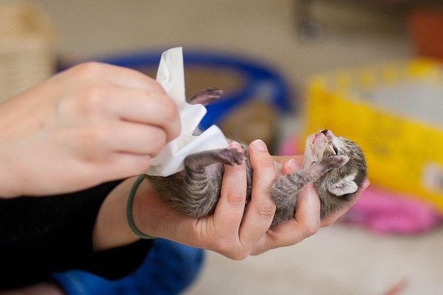 Как хозяину приучить немолодого кота или котенка к новому дому или другому месту жительства?