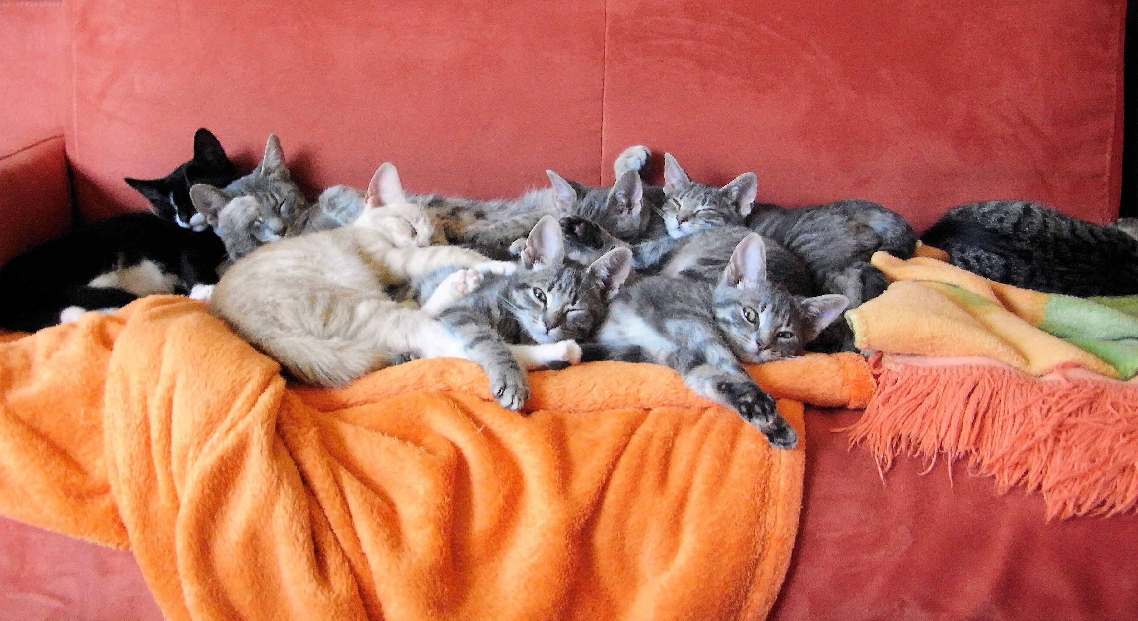 Почему кошки много спят, что делать, если кот постоянно, весь день дремлет?