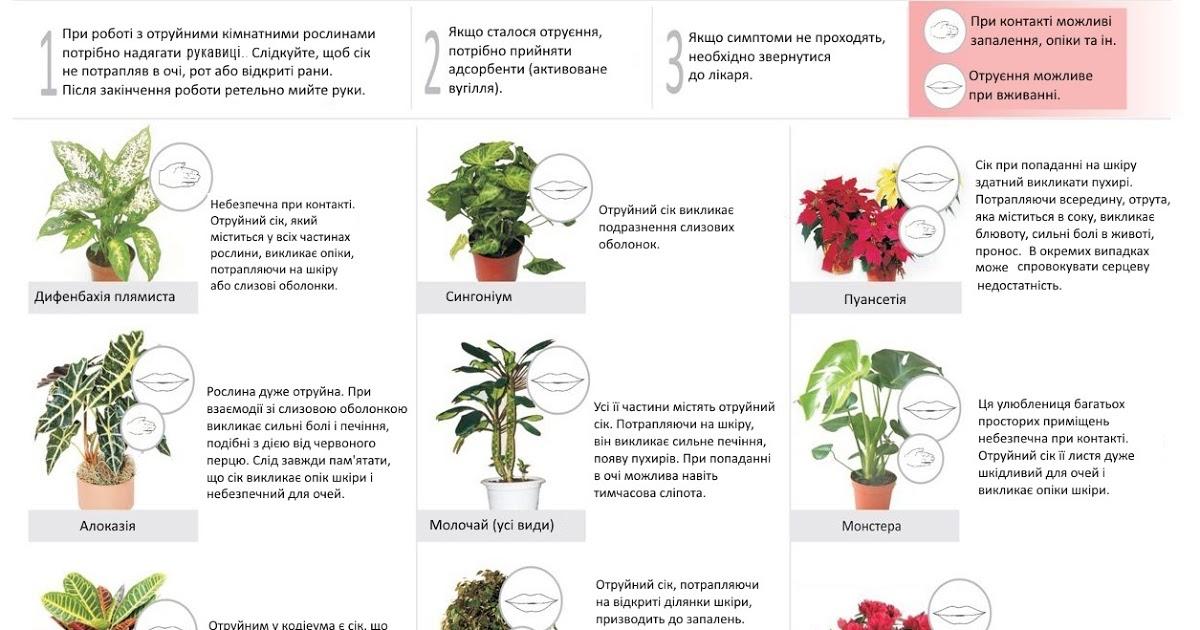 Обзор ядовитых растений для кошек. помощь при отравлении.