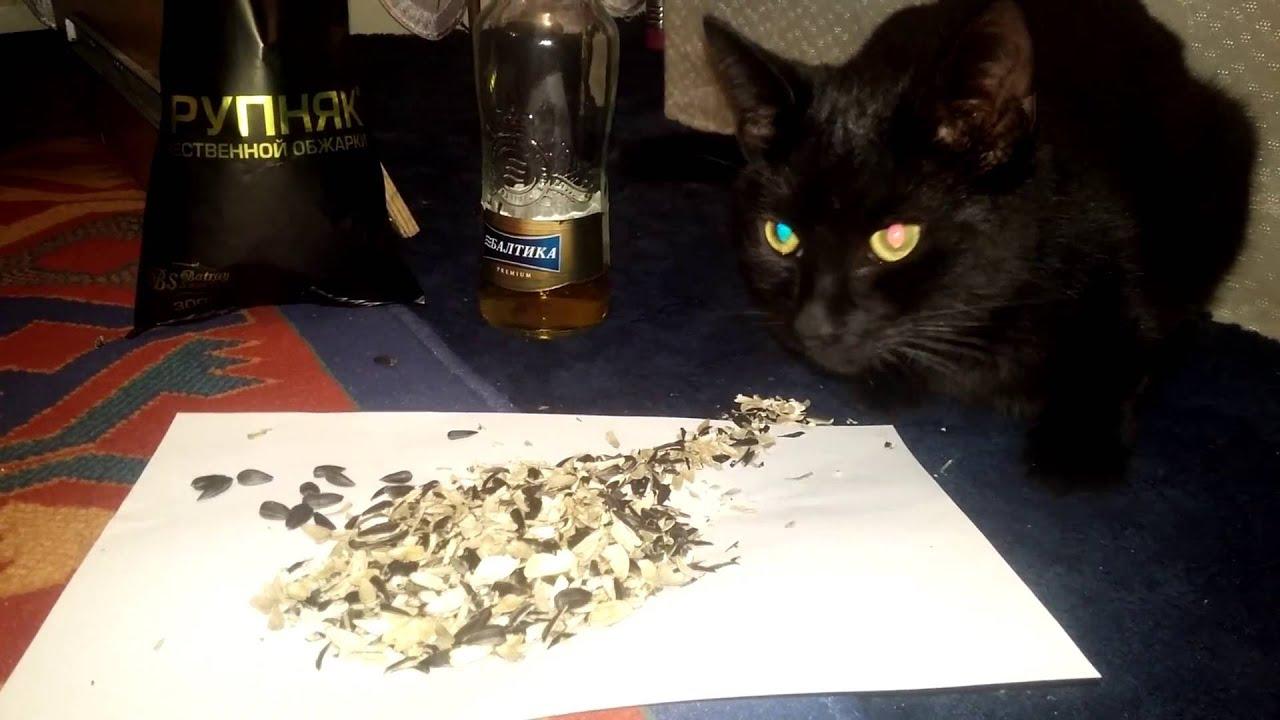 Кошка ест семечки: стоит ли переживать из-за пищевой привычки питомца
