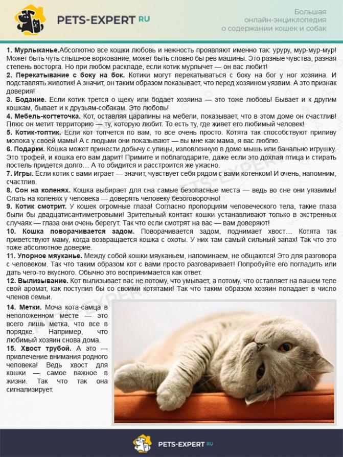Как понять, что кошка любит тебя — признаки проявления кошачьей любви