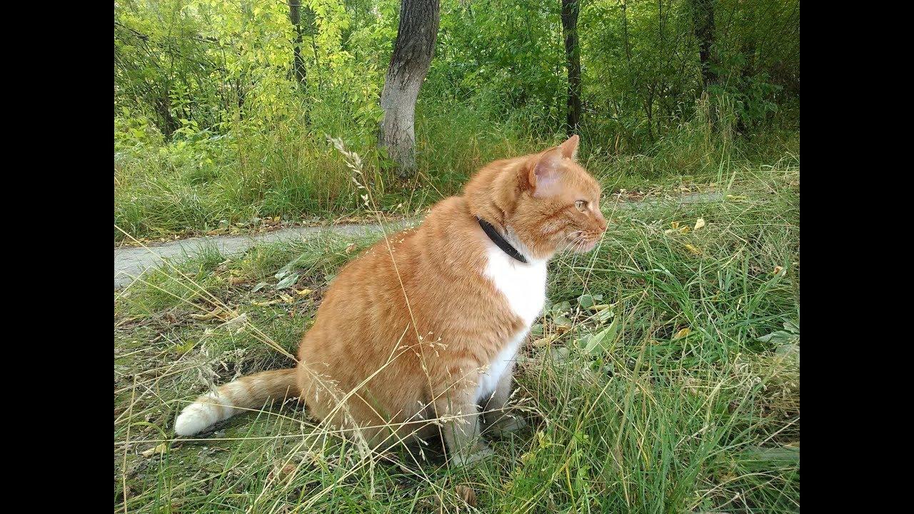 Разъяснение народных примет про рыжего кота