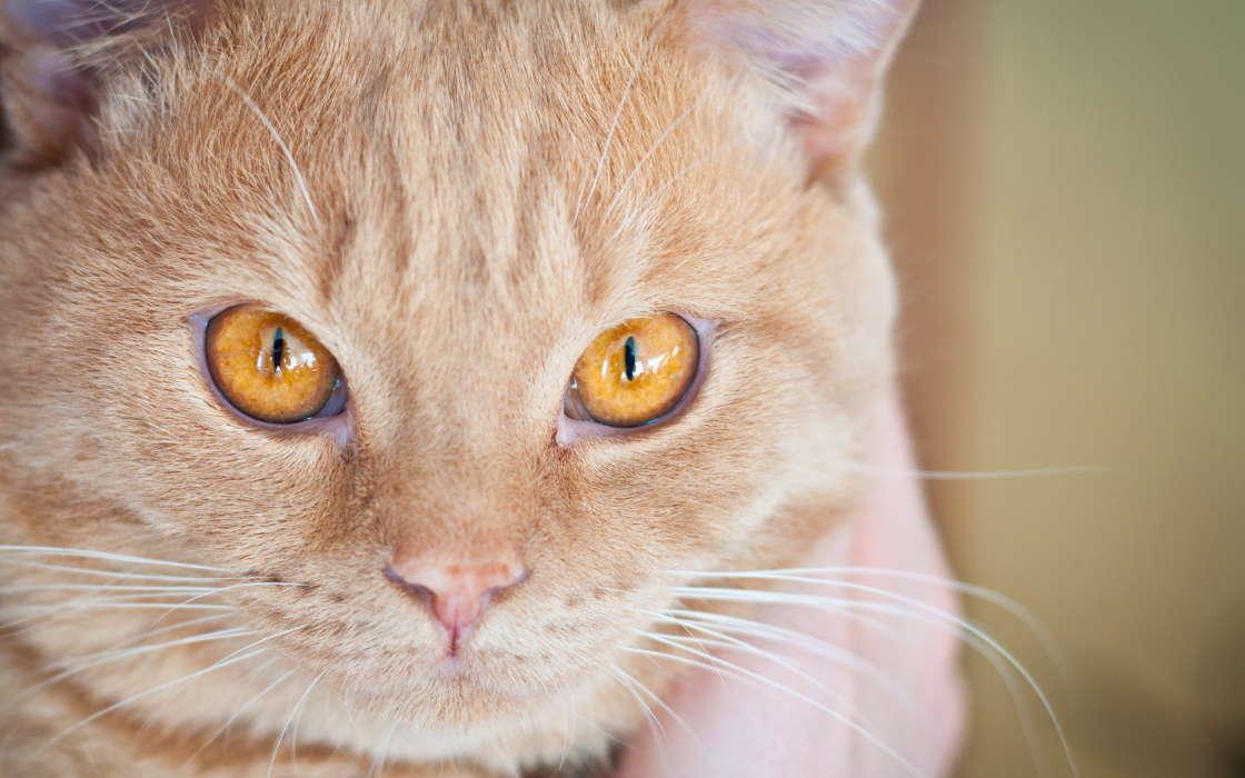 Цвет глаз у кошек: от чего зависит, почему меняется