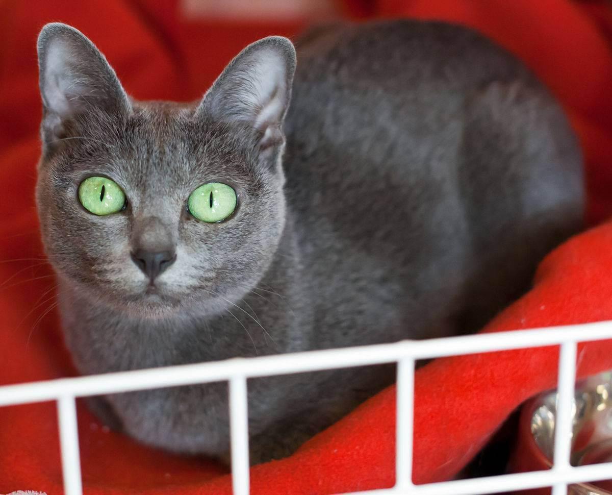 Котенок в новом доме, первые дни котенка в доме, котенок в квартире, как оставить котенка одного дома | кошки - кто они?