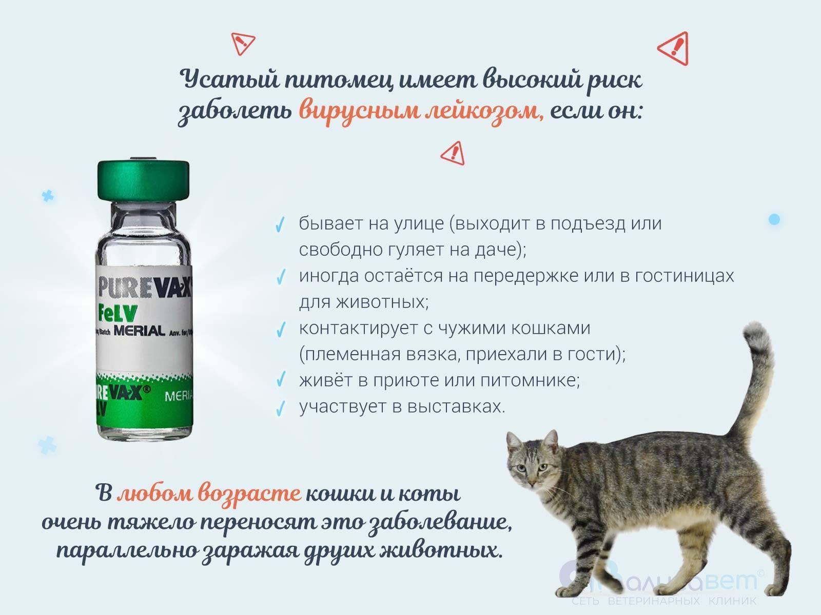 Коронавирус у кошки: 115 фото видимых признаков и своевременное распознание заболевания