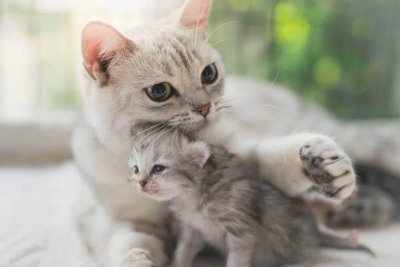 6 признаков здоровой кошки, узнайте, как определять, что кошка здорова
