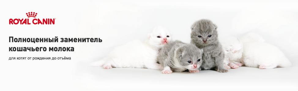 Поведение кошки после родов, чего ждать от «молодой матери»