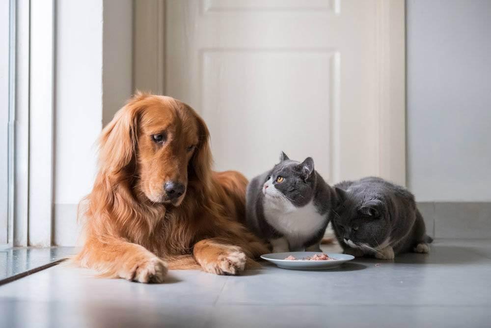 Подвержены ли кошки и собаки коронавирусу и могут ли они заразить человека