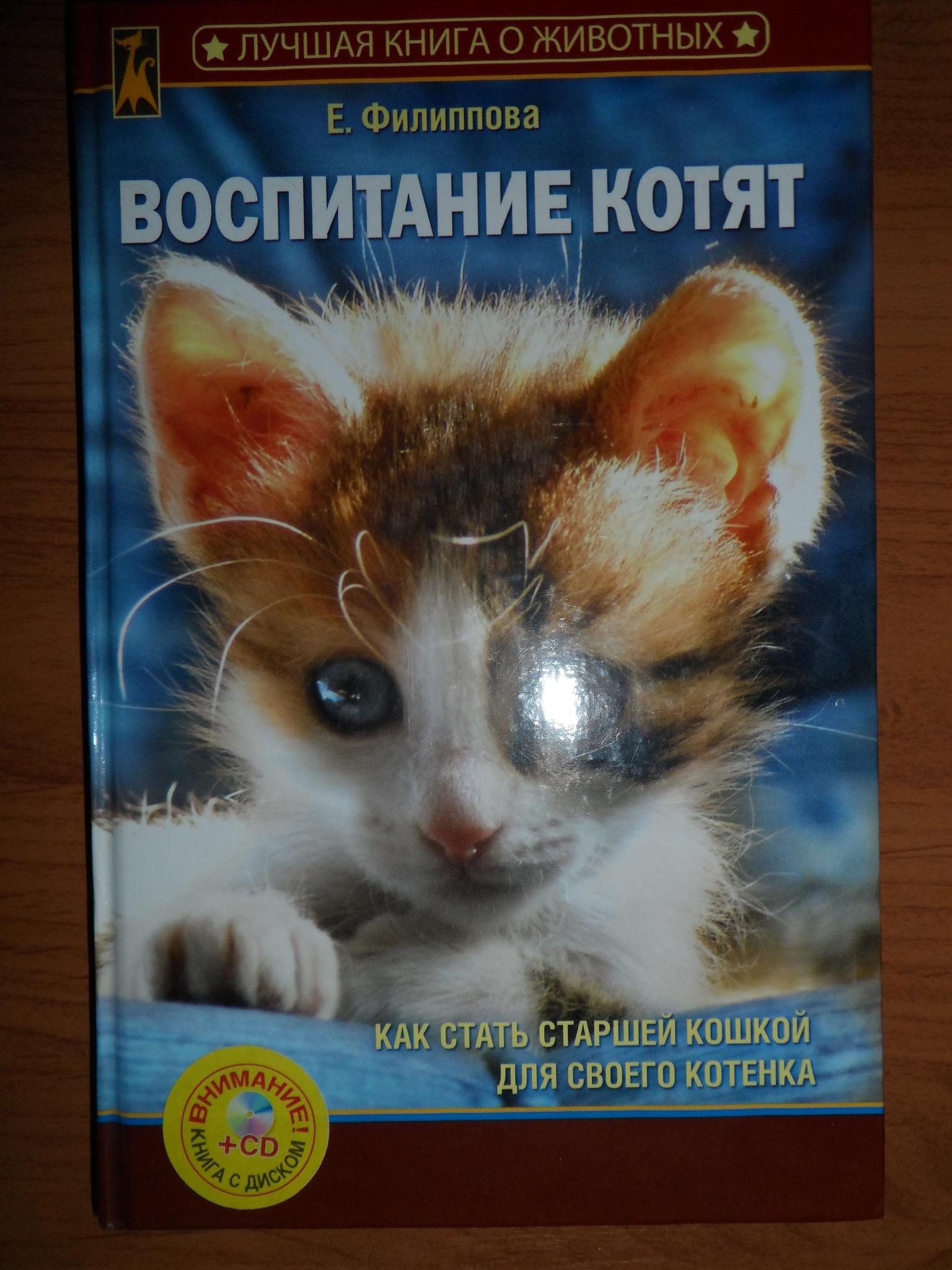 Советы по воспитанию котенка