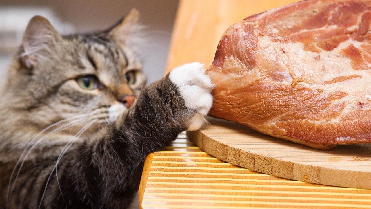 Неприятный запах из ушей у кошек: причины, что делать, методы лечения