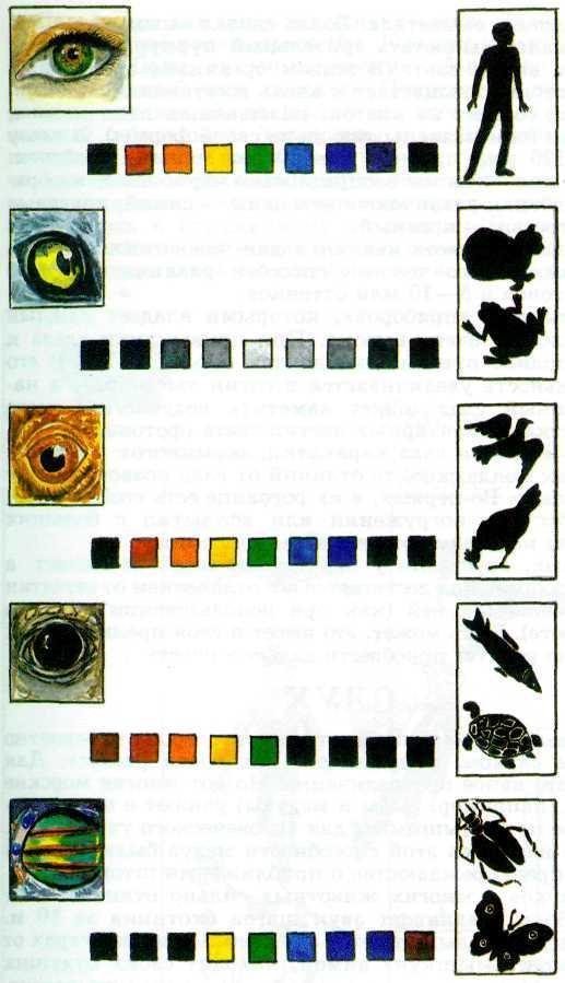 Как определяют, какие цвета видят животные?  - «как и почему»