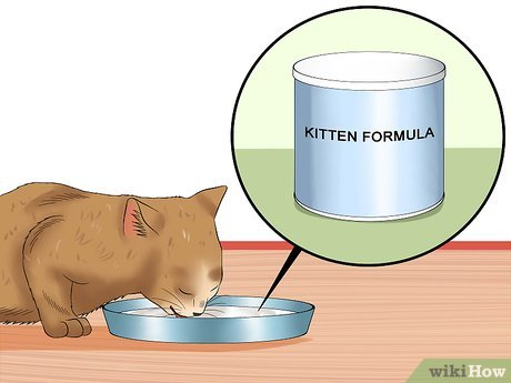 Кот мало пьет: выясняем причины