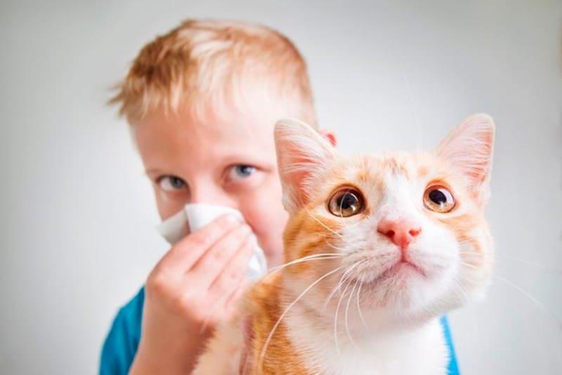 Аллергия на кошек: симптомы, диагностика, методы лечения