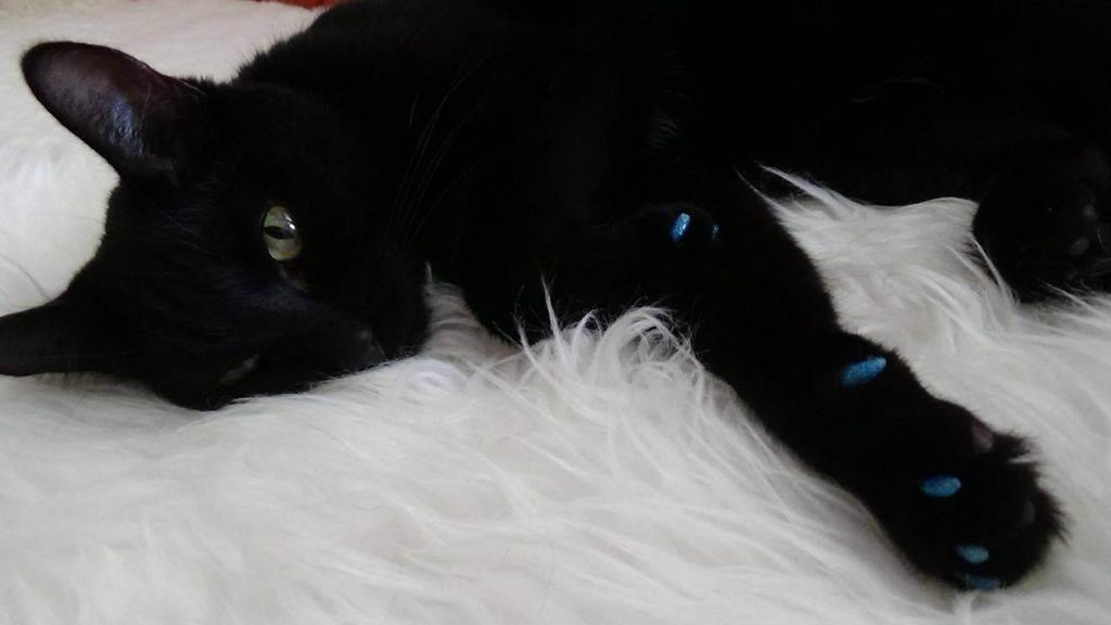 Как самостоятельно надеть и снять антицарапки для кошек на когти, советы