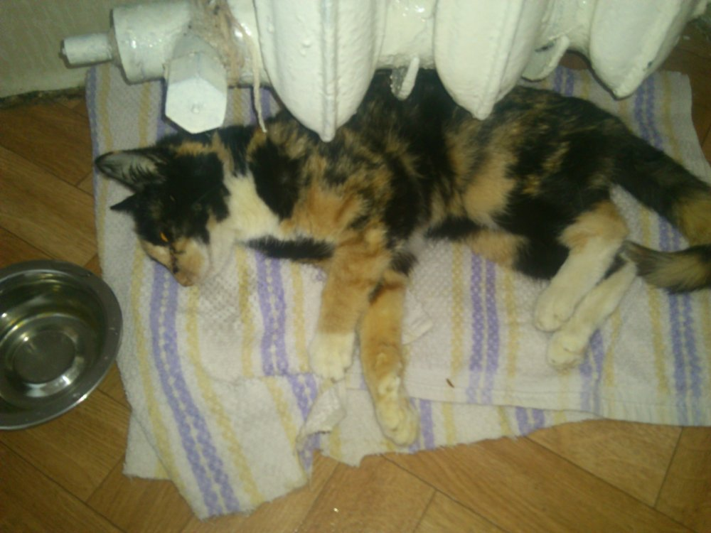 Если кошка умирает дома — приметы и суеверия: к чему и почему это случается, выносит ли кот всю беду из жилья, когда погибает, что делать?