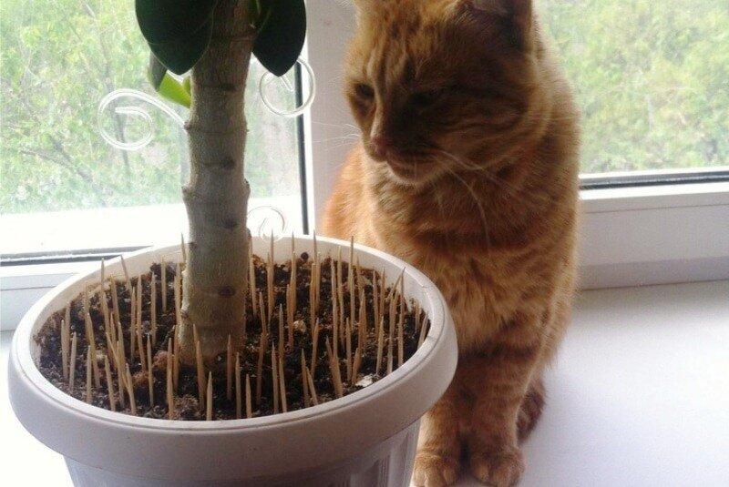 Как отучить кошку грызть цветы: советы и маленькие хитрости