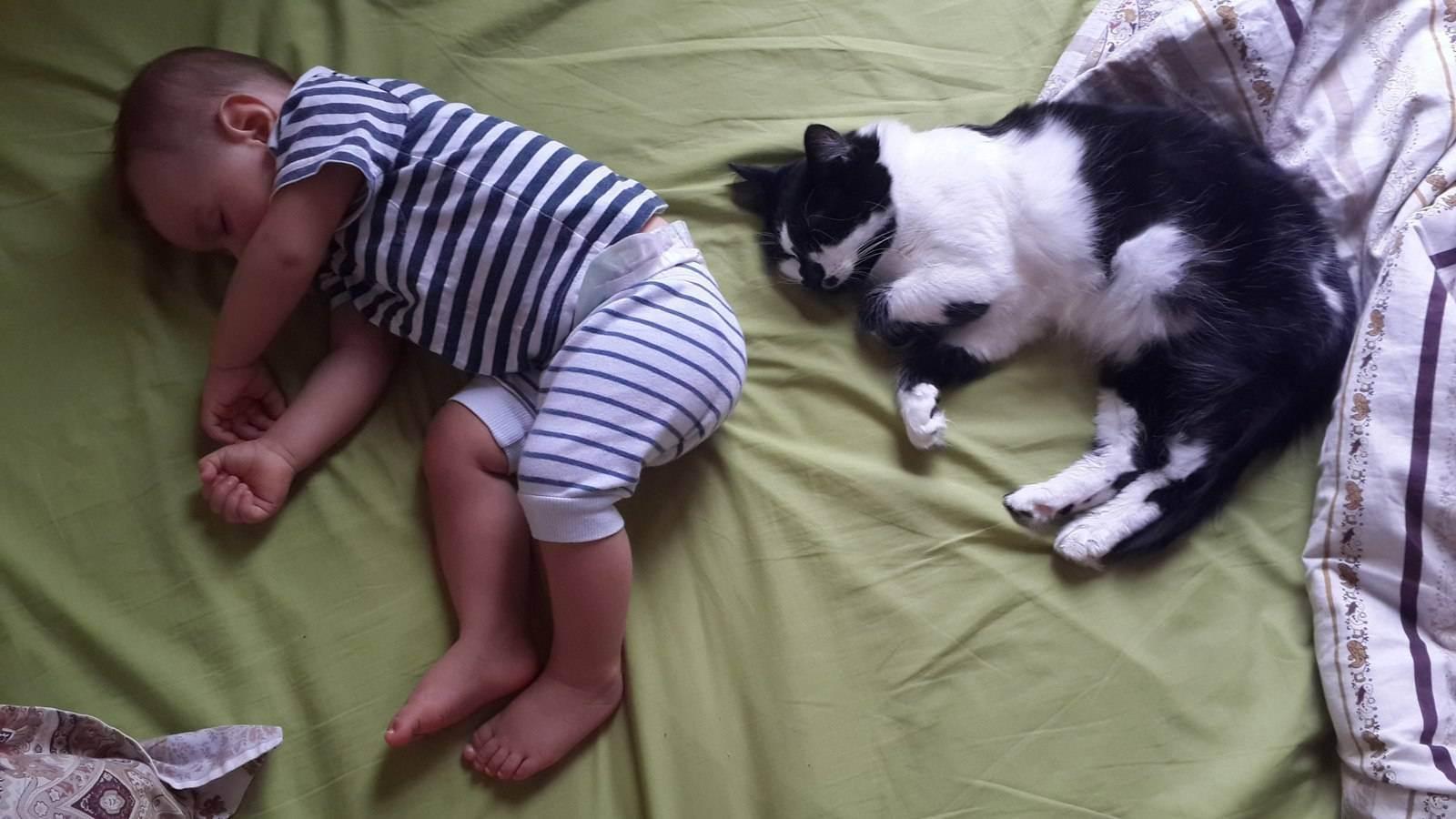 Беременность и кошка в доме
