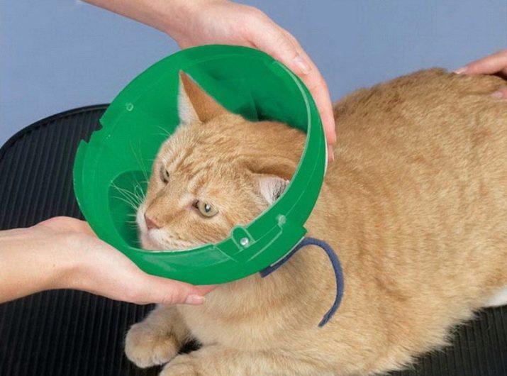 Попона для кошки после стерилизации: из колготок, носков, как сшить своими руками, как надеть и завязать попону