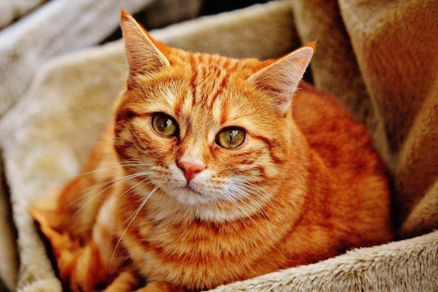 Можно ли заразиться коронавирусом от кошки