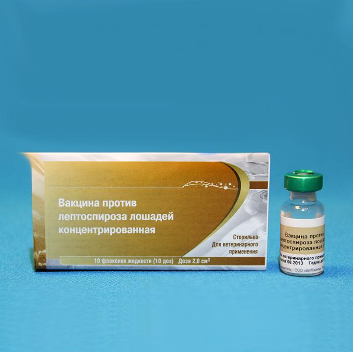 Лептоспироз у кошек: симптомы и лечение, вакцина против заболевания, вызываемого спирохетами