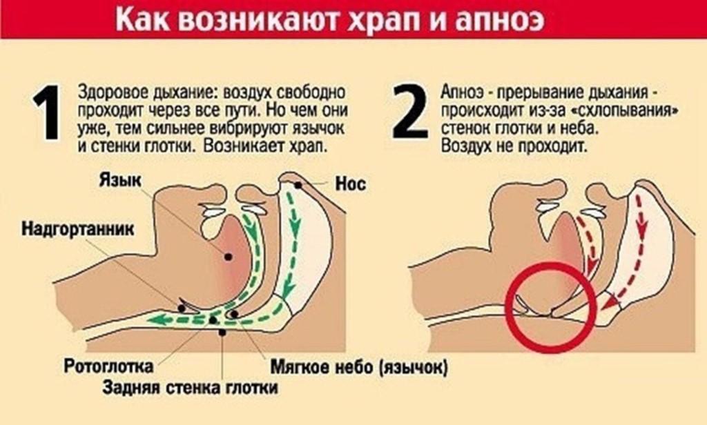 Кот храпит во сне: причины и что делать. почему кошка храпит во сне кот начал храпеть во сне - новая медицина
