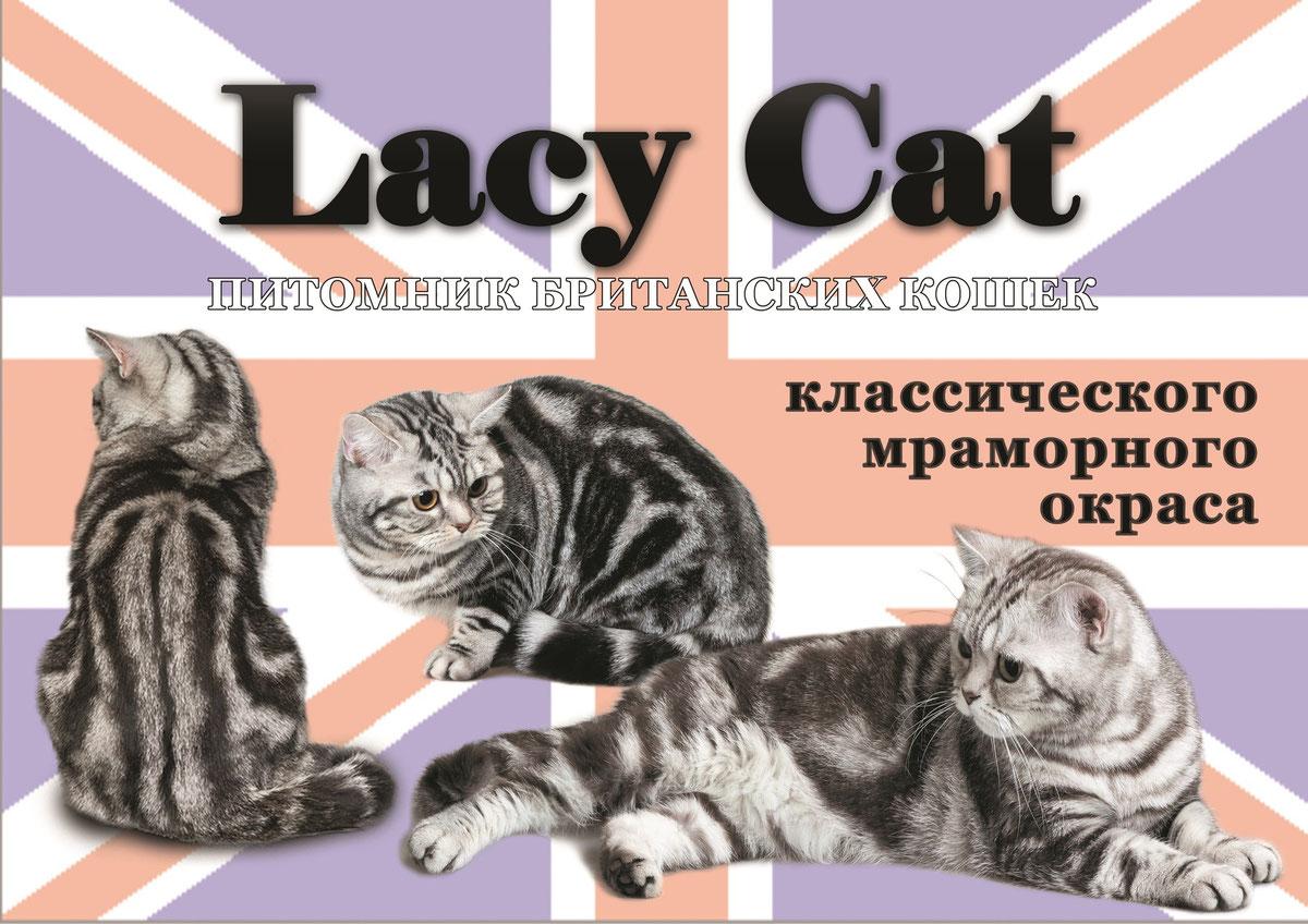 Окрасы британской кошки