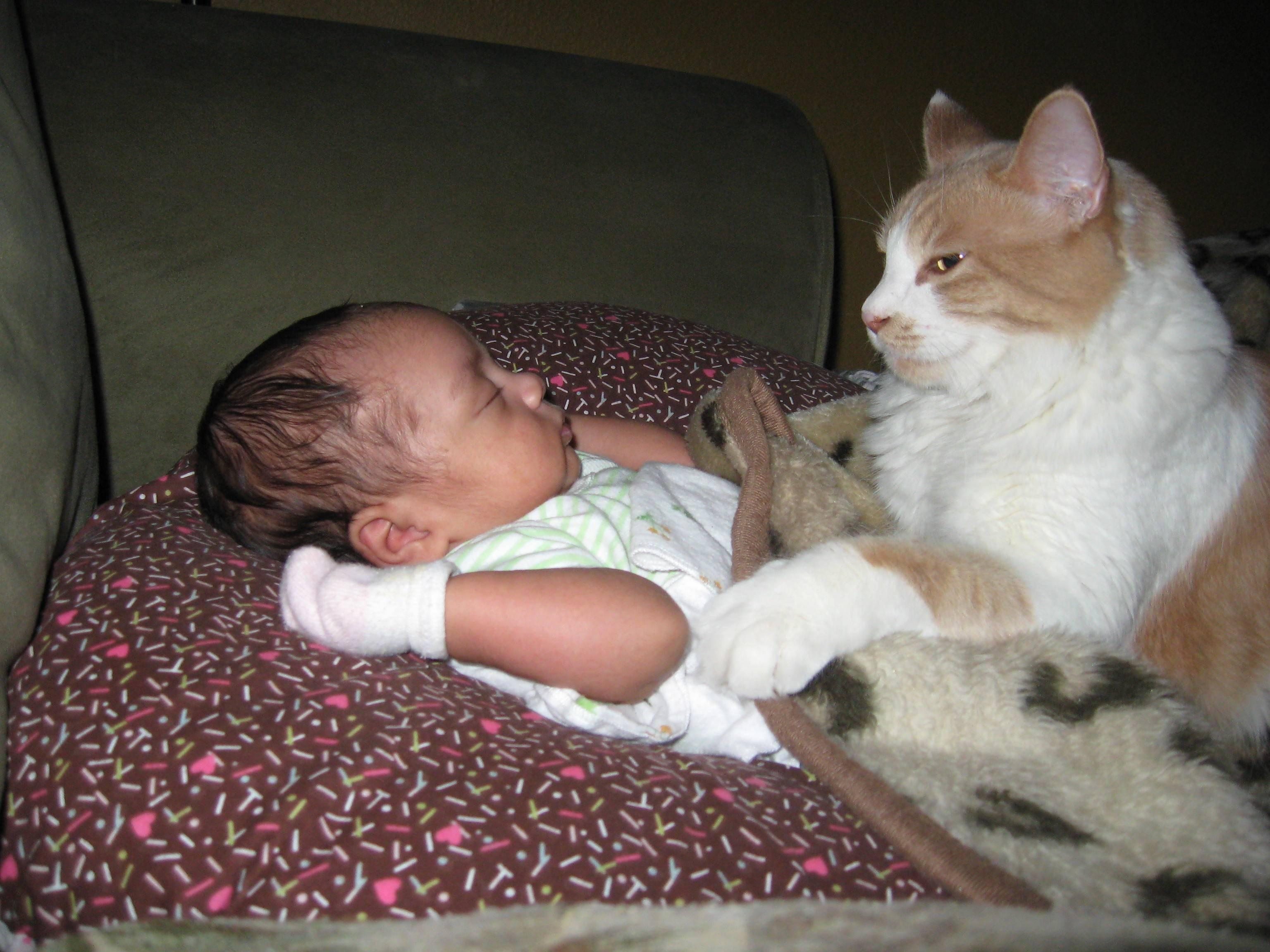 Как кошки относятся к новорожденным детям