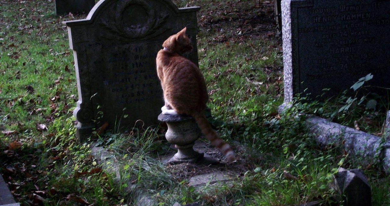 Как правильно похоронить кота