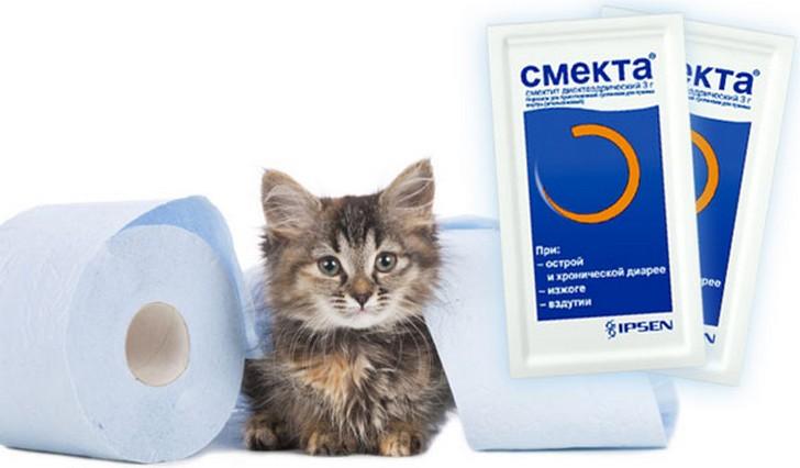 Кот отравился, что делать: 4 народных и ветеринарных способа лечения