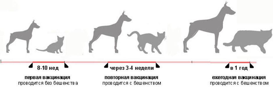 Прививки для кошек: виды прививок, когда необходимо их делать и от каких заболеваний